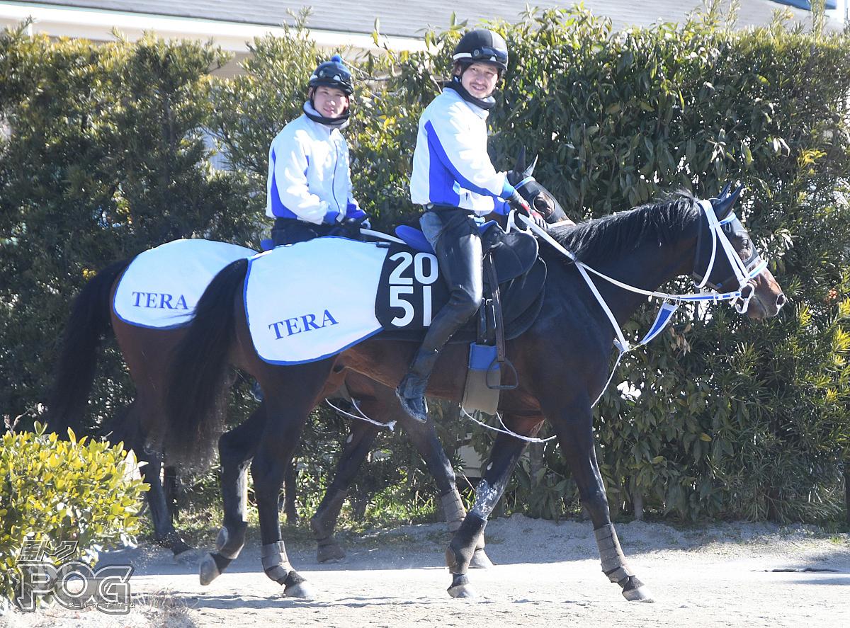 ベストグローリエの馬体写真