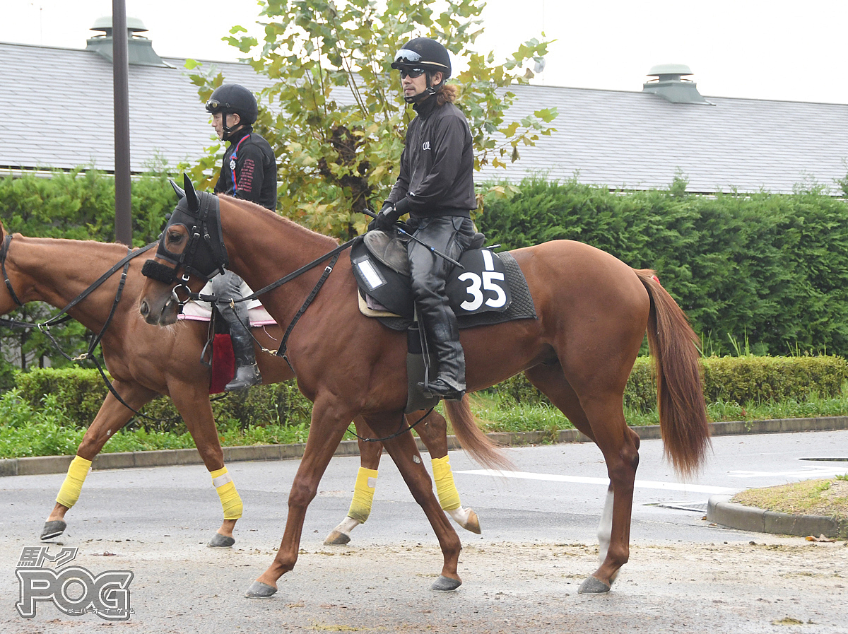 ヴィーヴァバッカスの馬体写真
