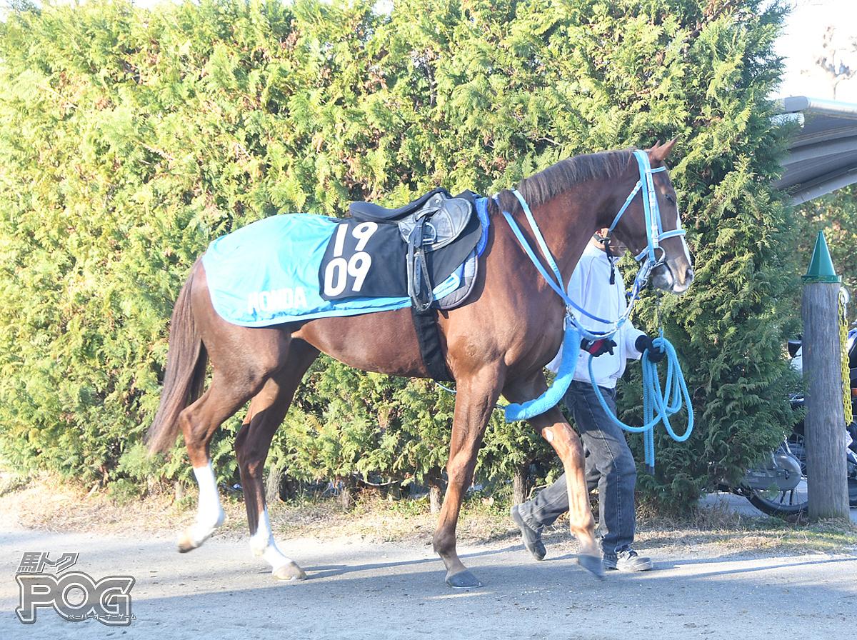 デンコウエルドラドの馬体写真