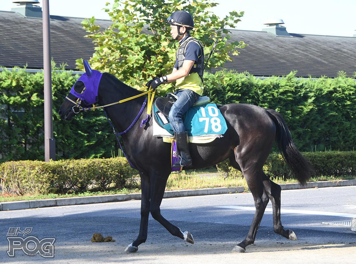 メイショウジョワの馬体写真