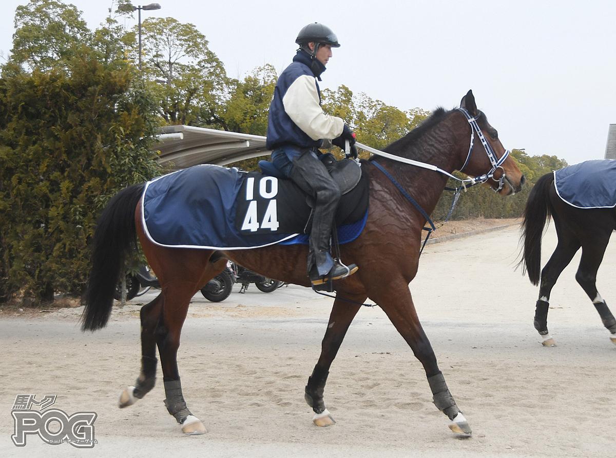 メイショウマキシムの馬体写真