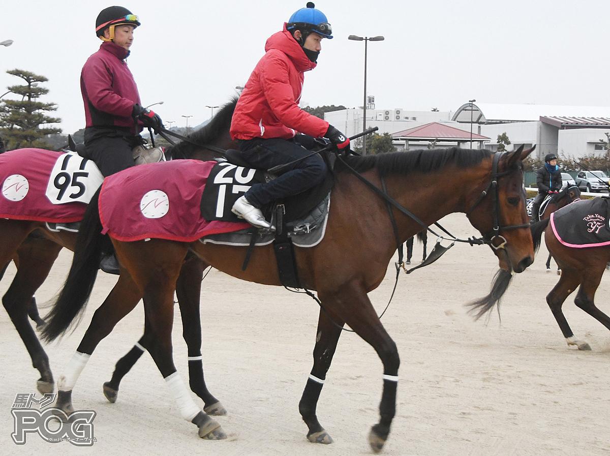 メイショウテツワンの馬体写真