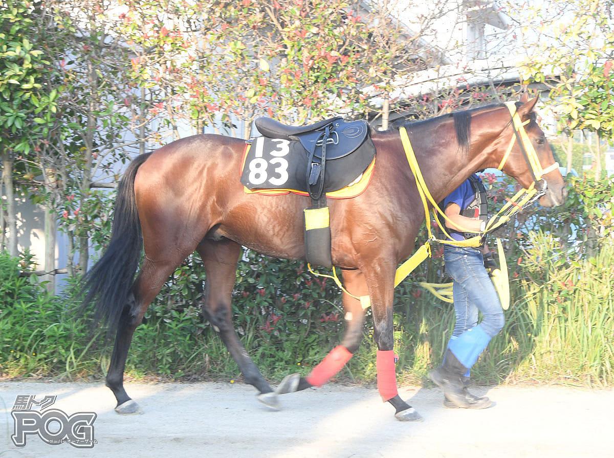 デンコウスティールの馬体写真