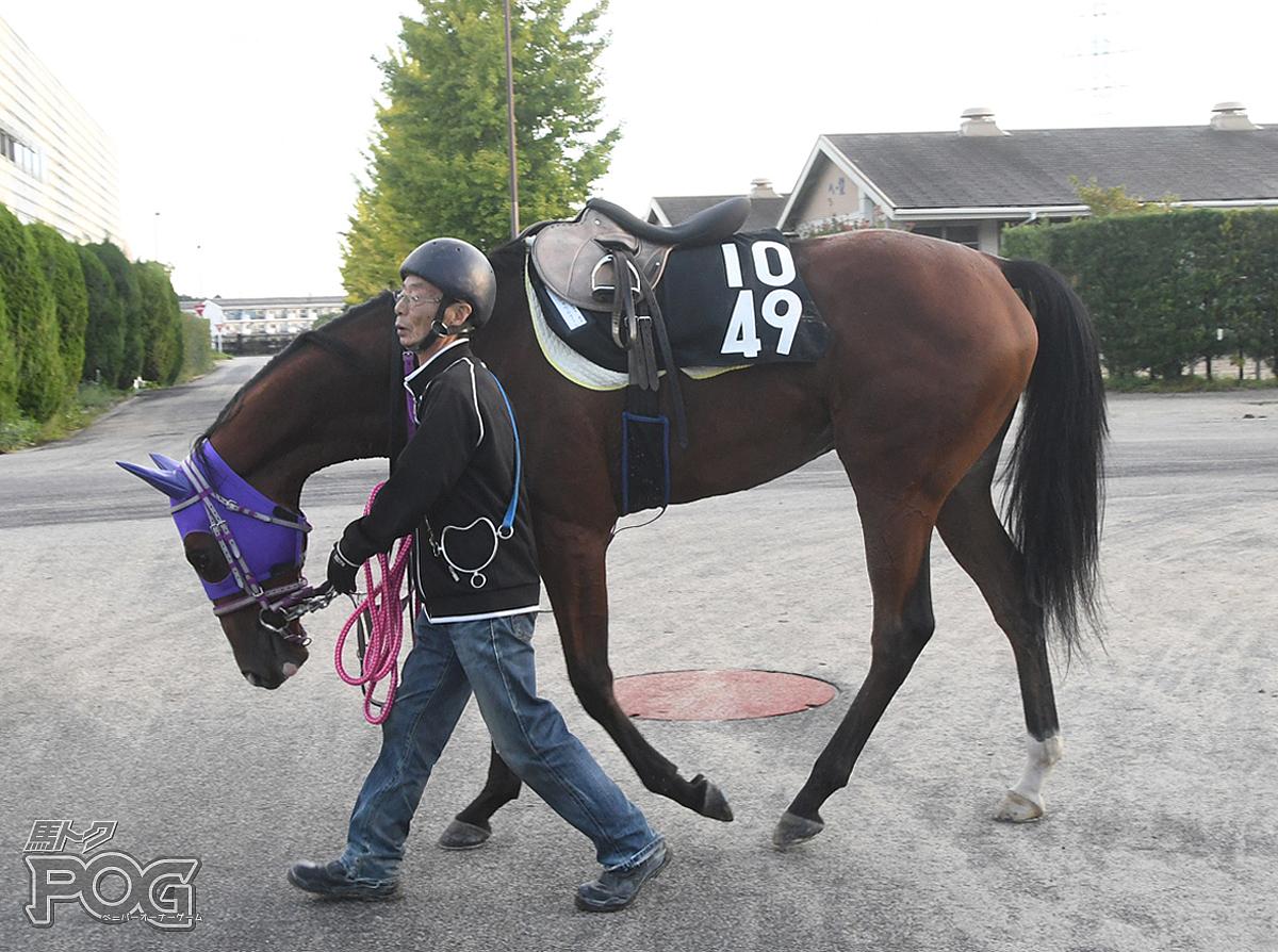 メイショウルクールの馬体写真
