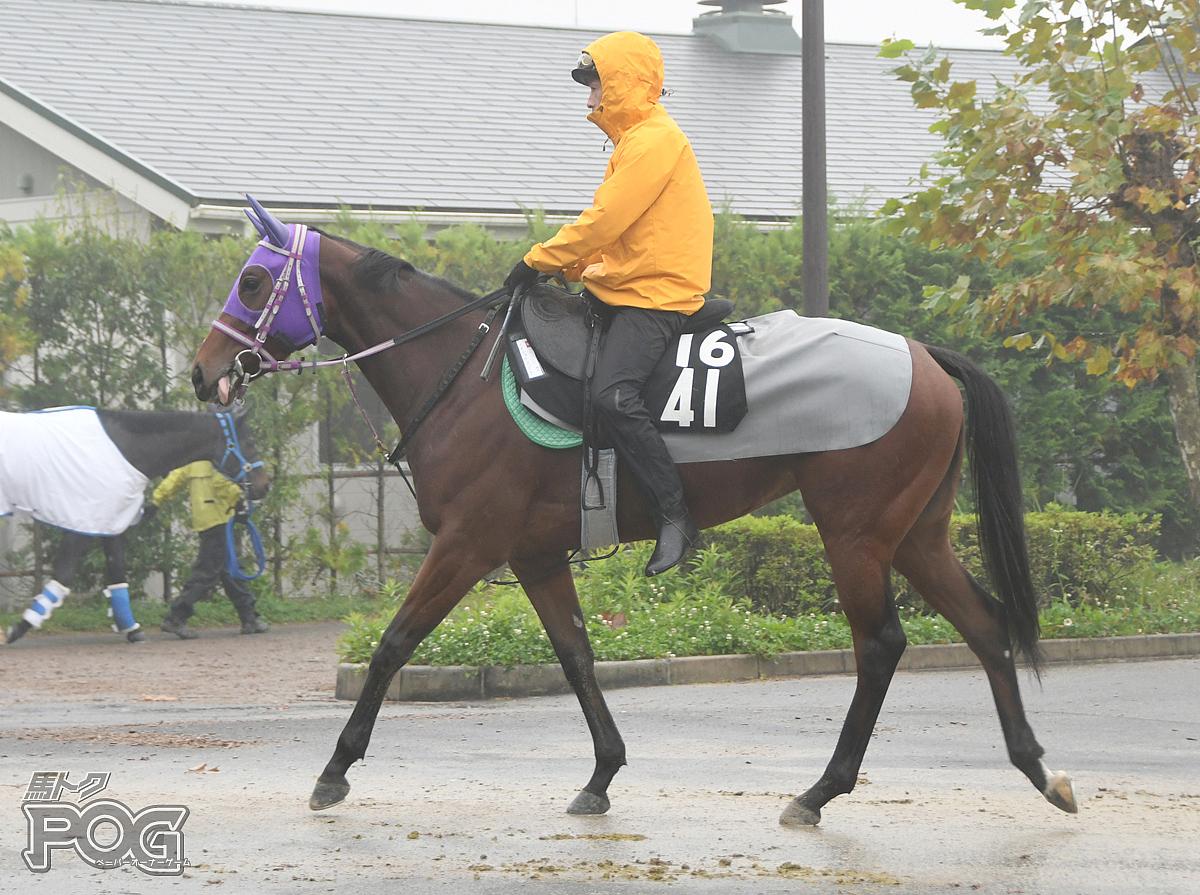 メイショウコゴミの馬体写真