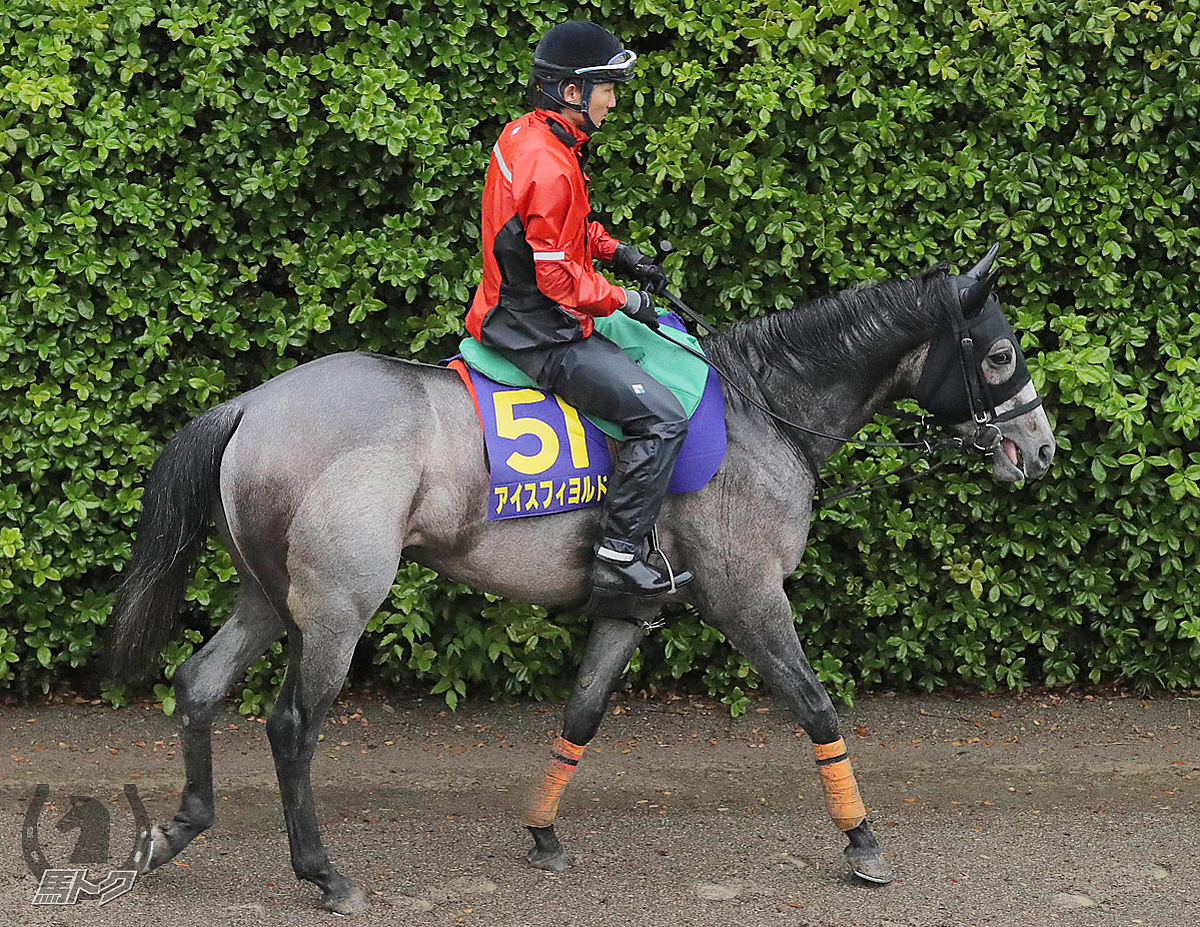 アイスフィヨルドの馬体写真
