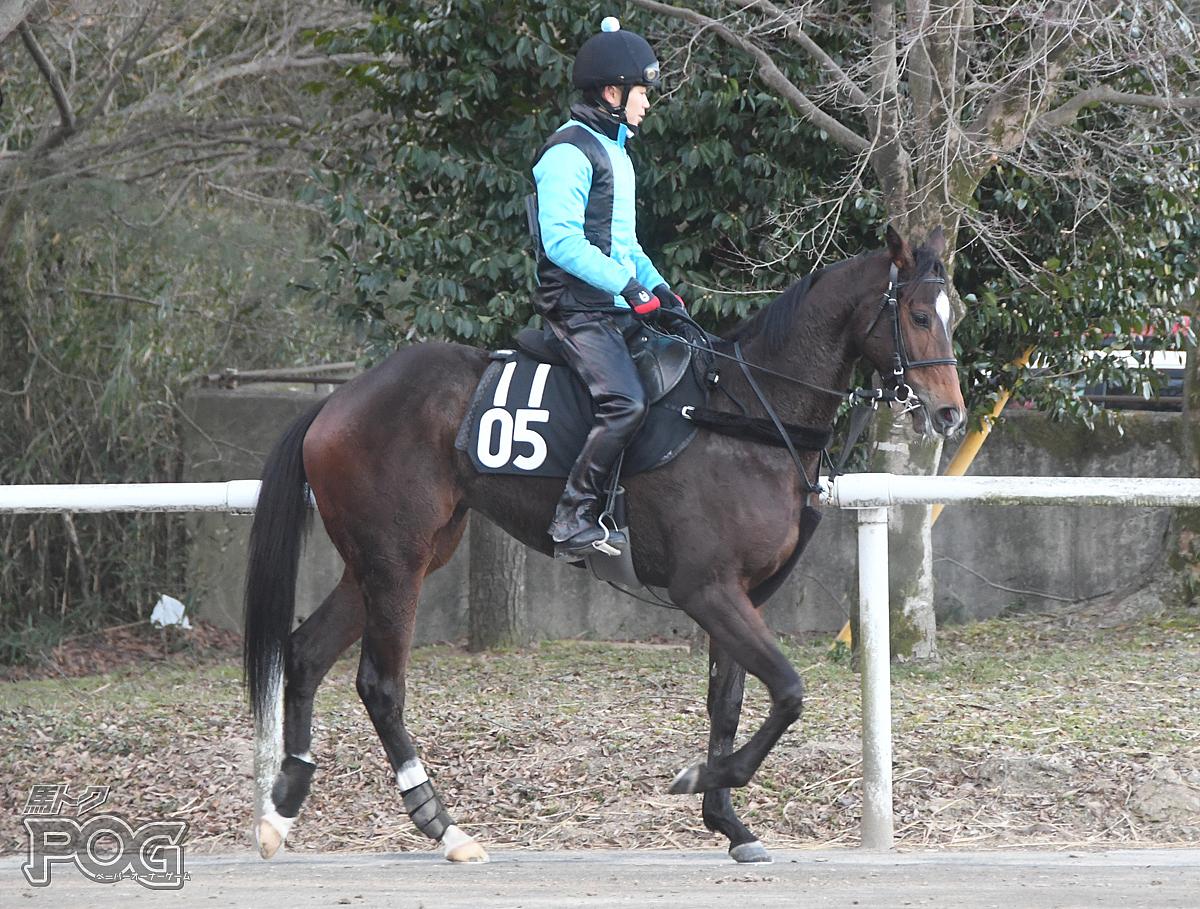 ラクシュミーの馬体写真