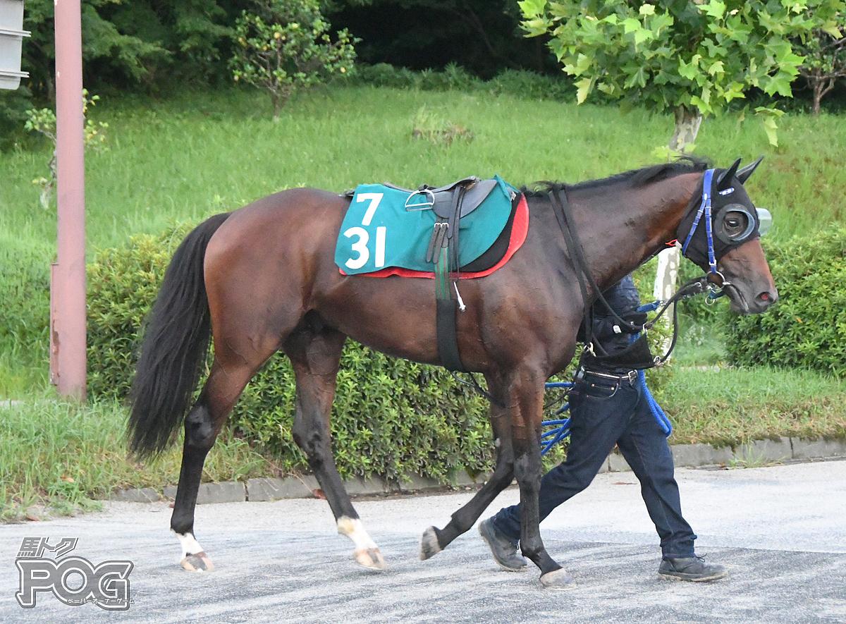 クールウインの馬体写真