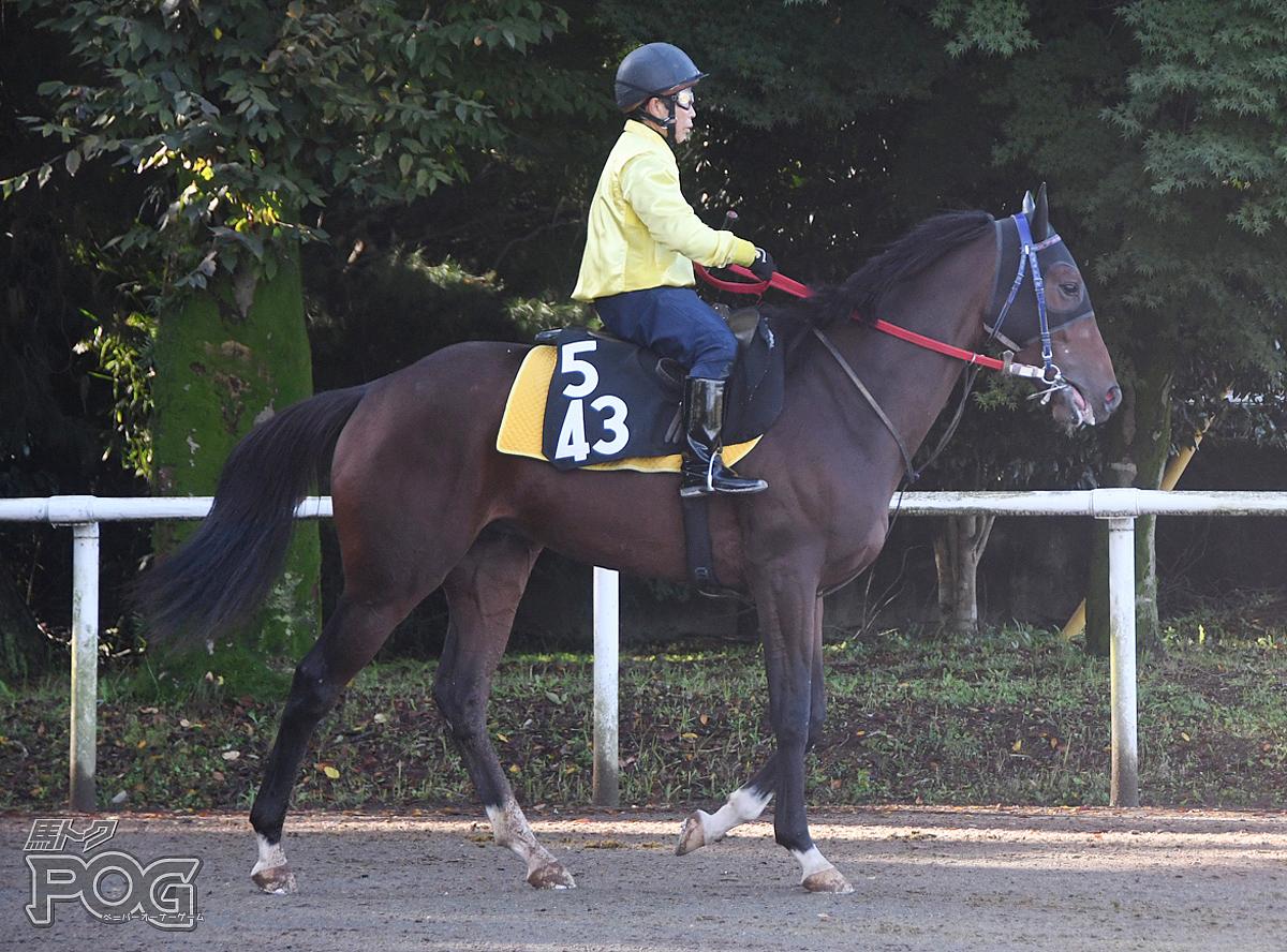 スーサンドンの馬体写真