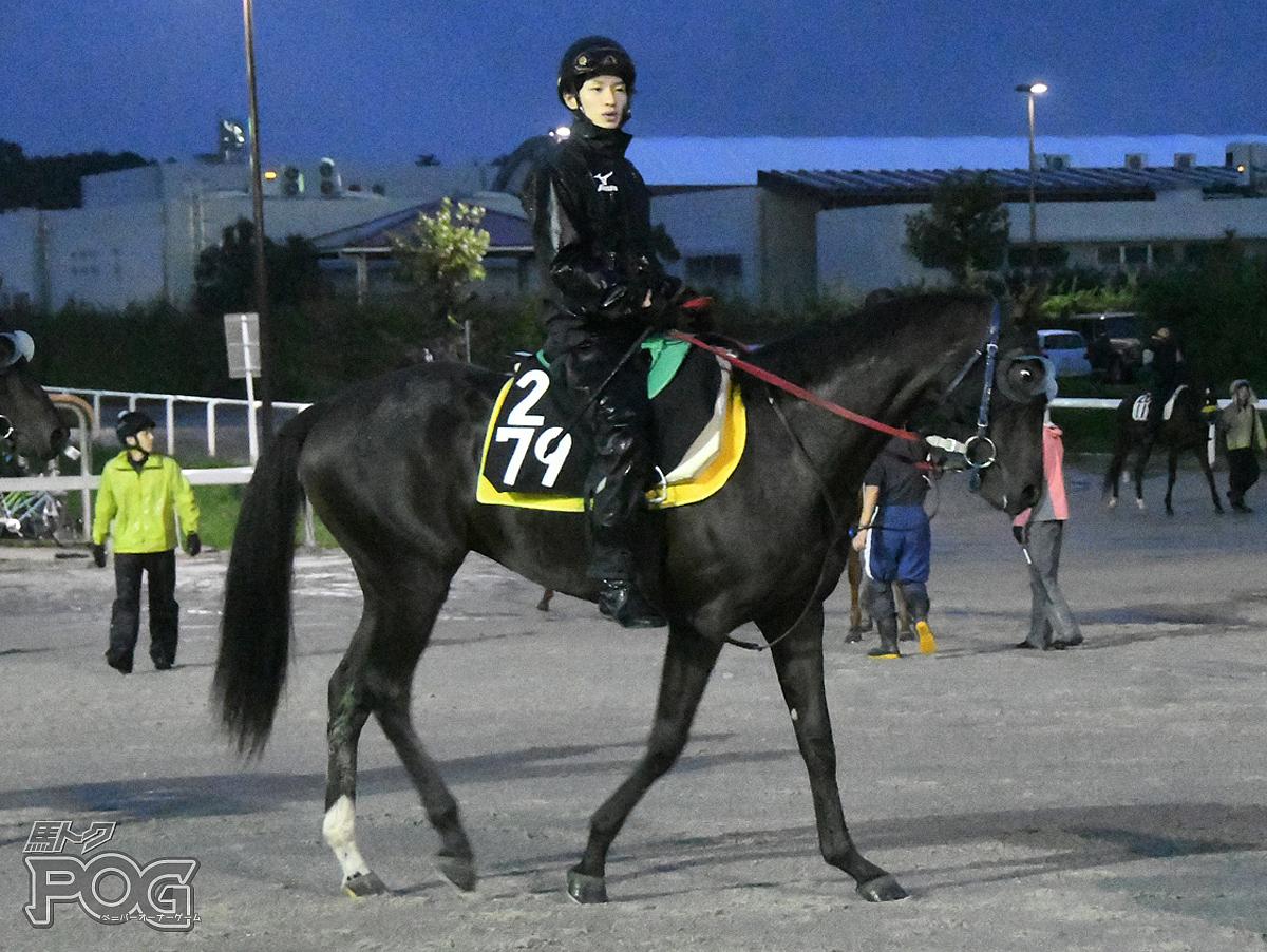 グランドフサイチの馬体写真