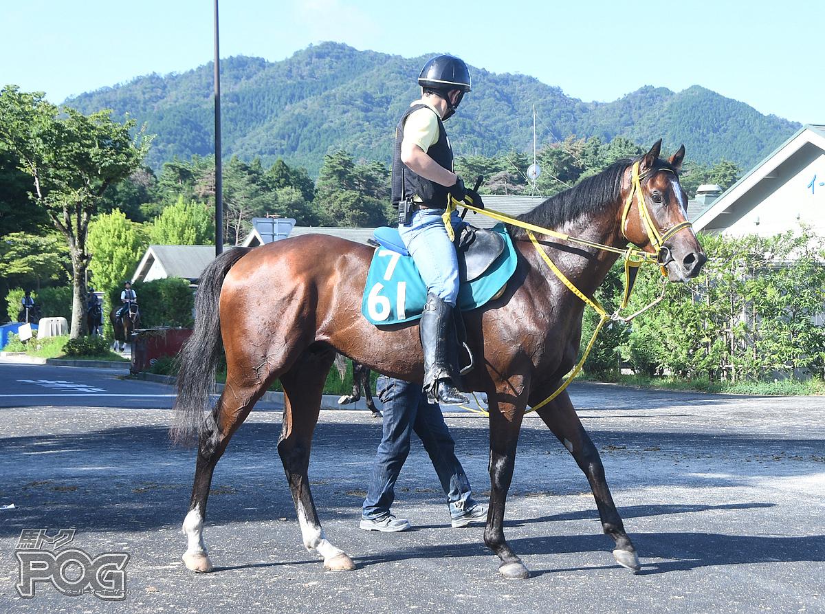 エイシンヘリオスの馬体写真