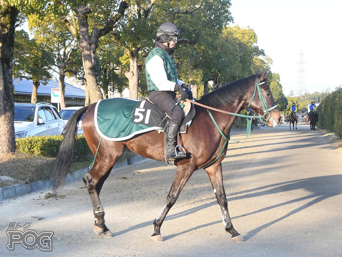 エイシンネメシスの馬体写真