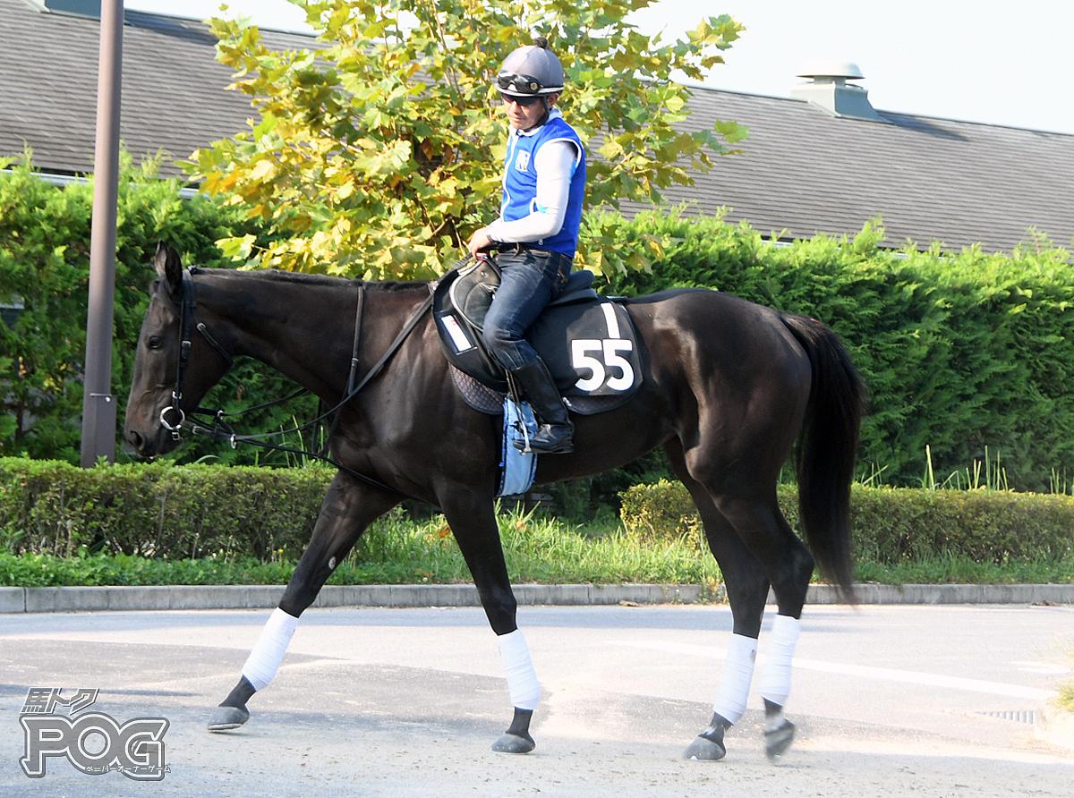 エイシンヘリテイジの馬体写真