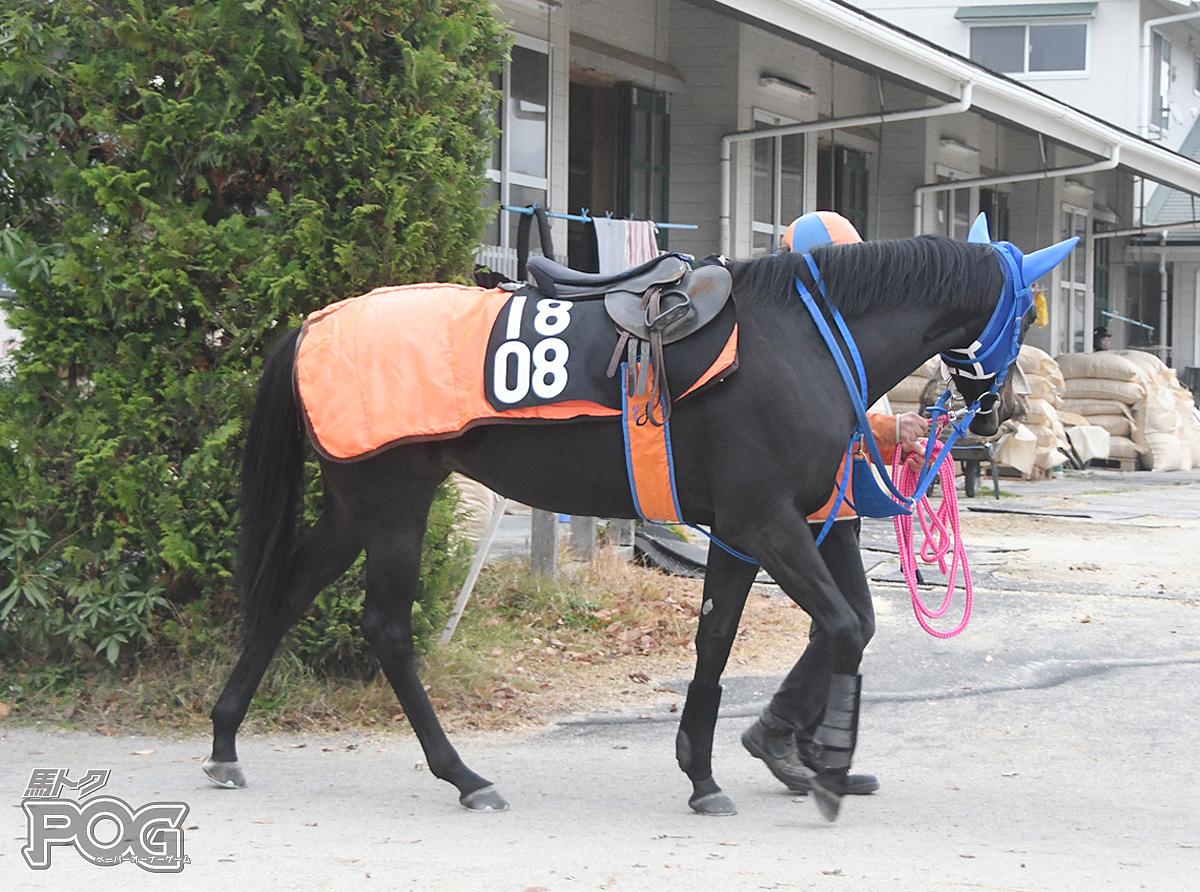 エイシンセレーネの馬体写真