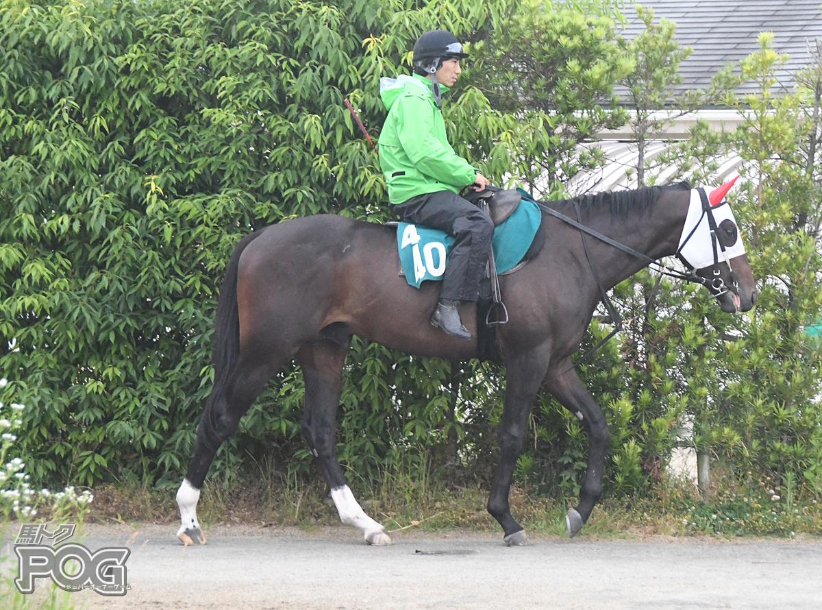 キングフォルテの馬体写真