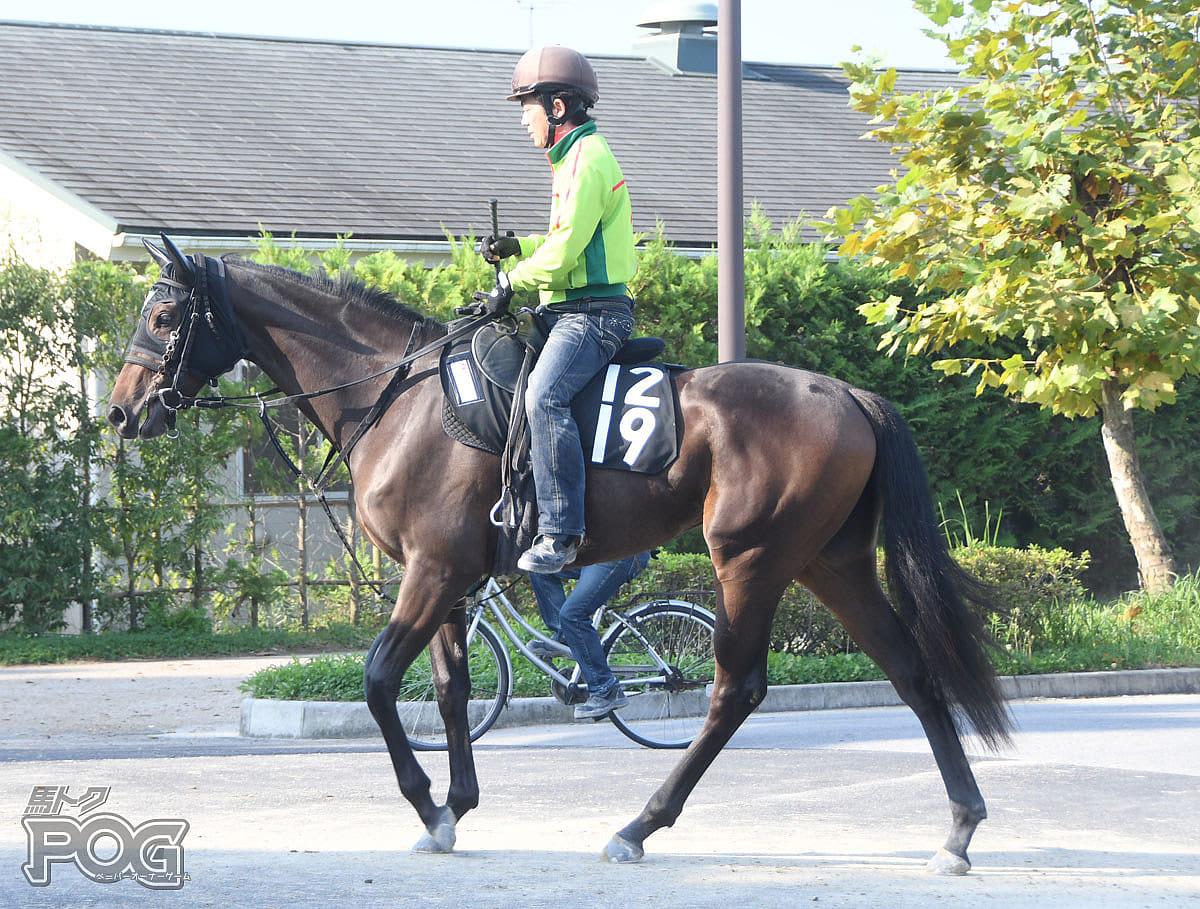 ビーサエッタの馬体写真