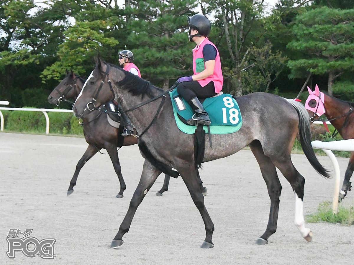 フルオーライトの馬体写真
