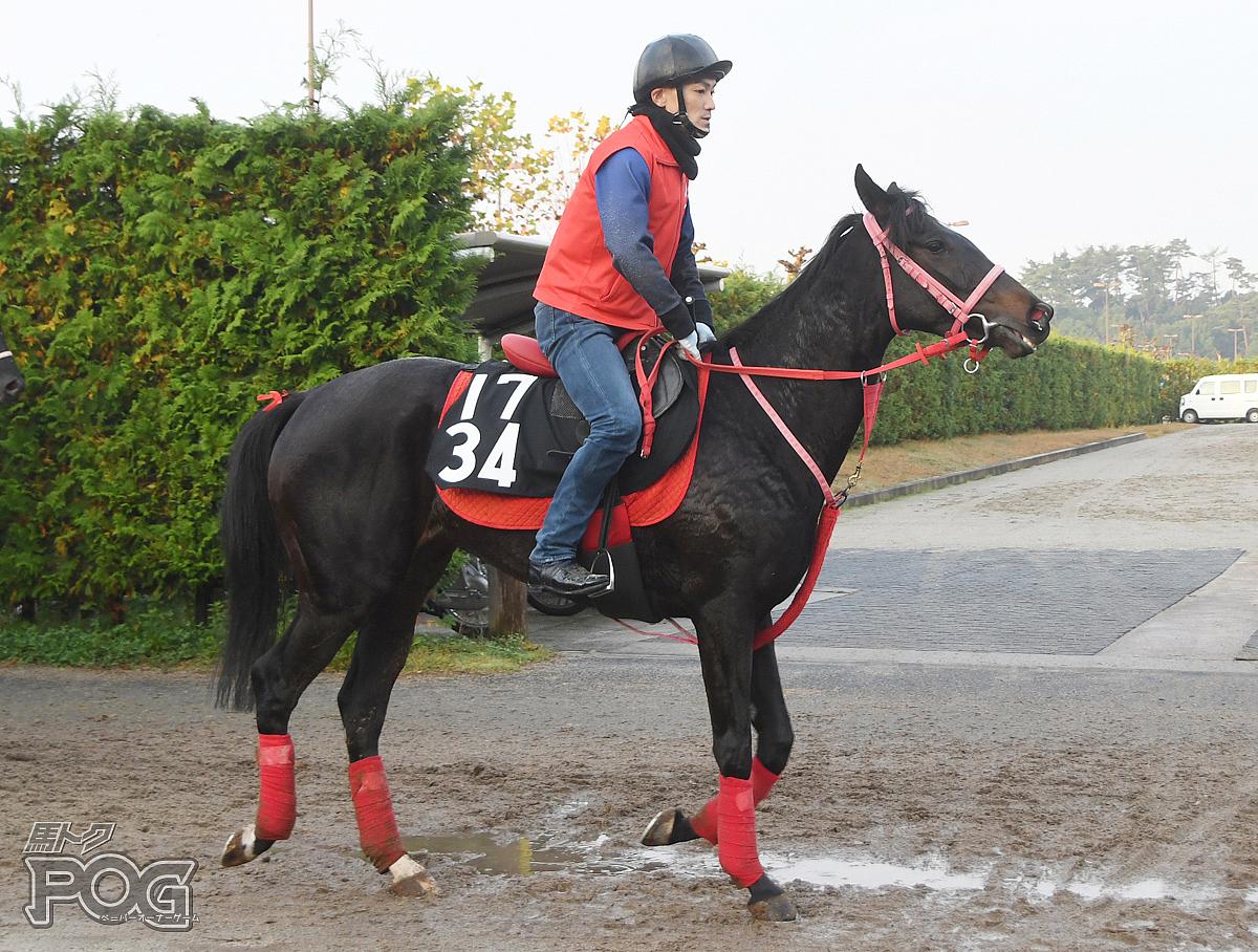 ブラックブラックの馬体写真