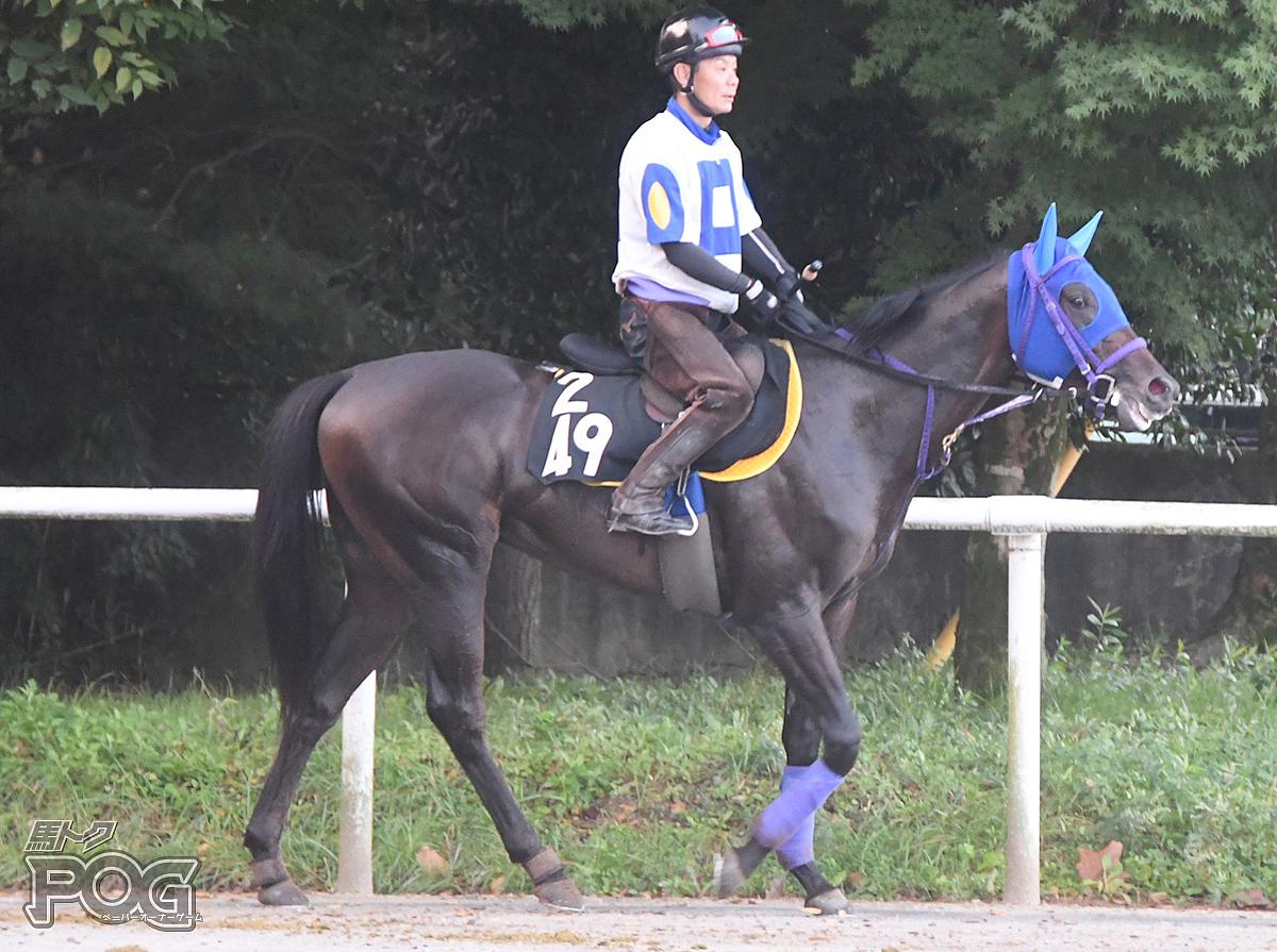 キボウノダイチの馬体写真
