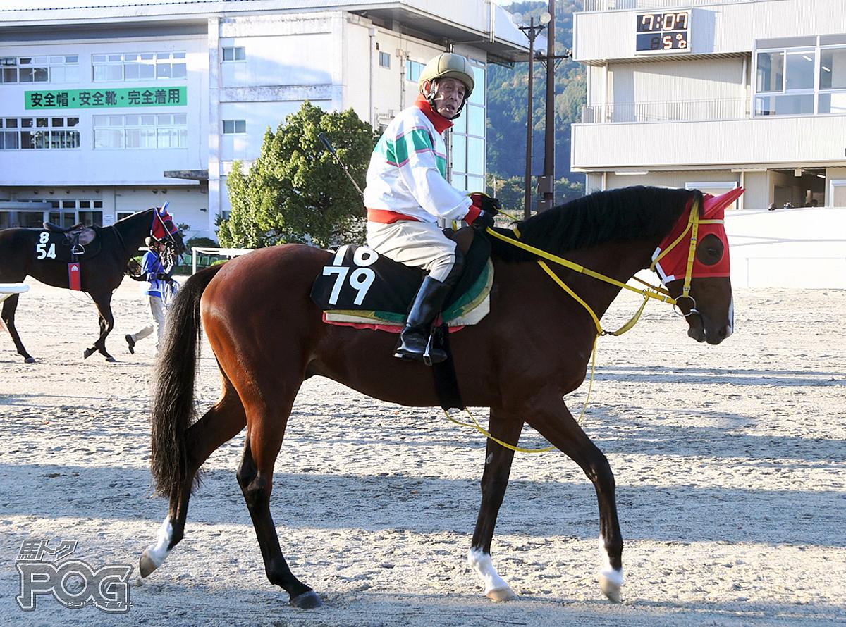 クリノセザンヌの馬体写真