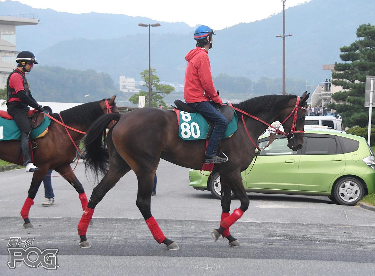 ユウクインスターの馬体写真