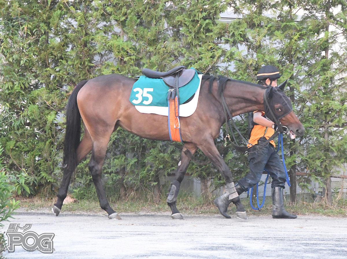 マエガミの馬体写真