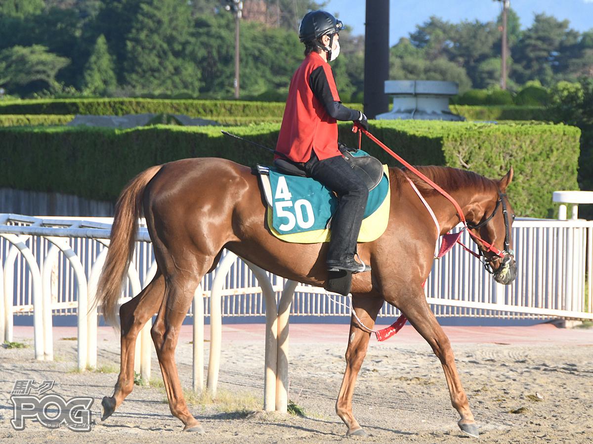 ペイシャルアスの馬体写真
