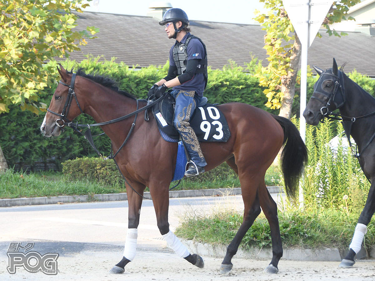 ライクアジャーニーの馬体写真