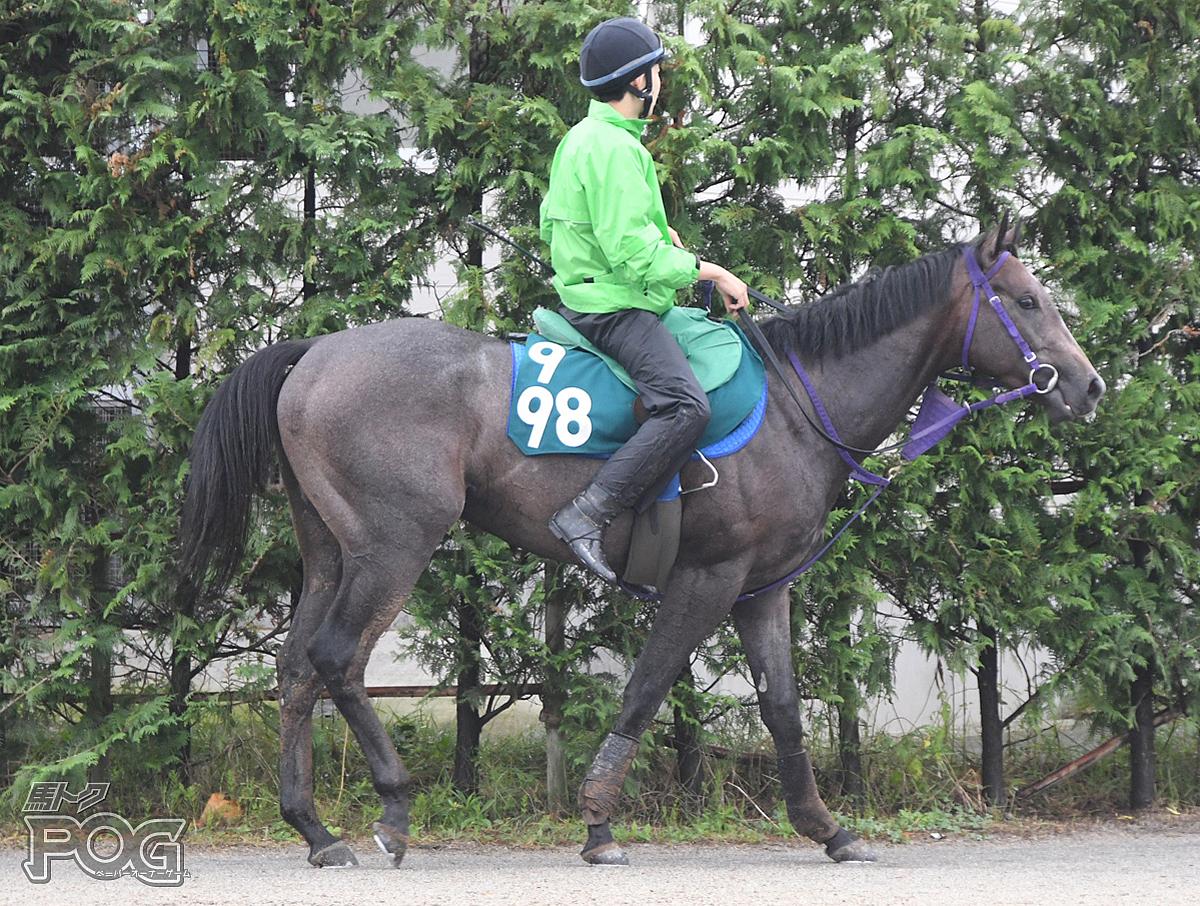 タイガートゥーレの馬体写真