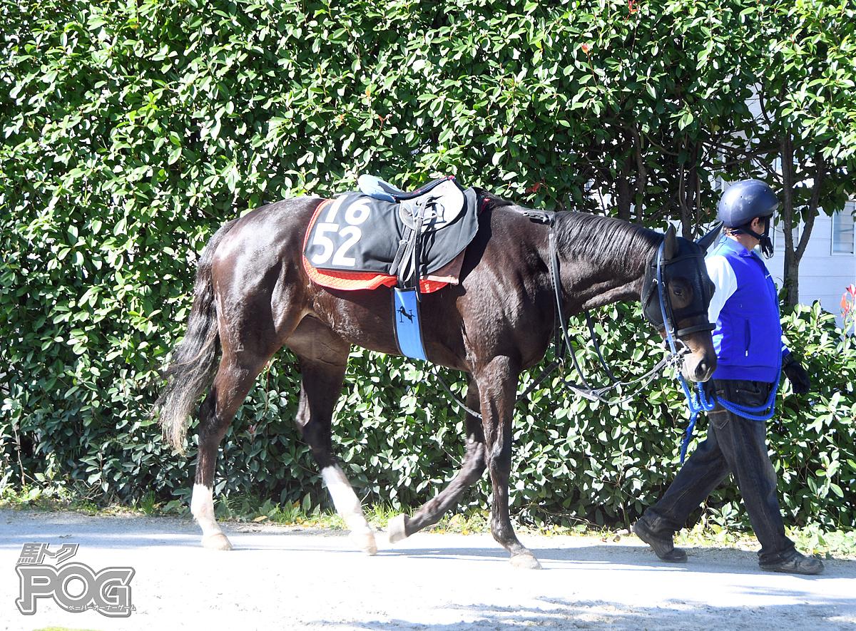 グラスジャンヌの馬体写真