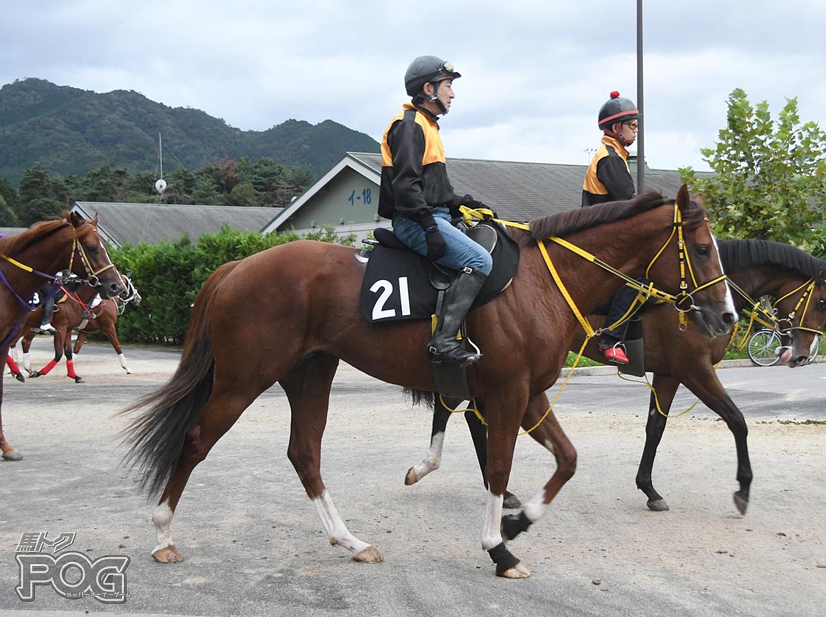 アカツキジョーの馬体写真