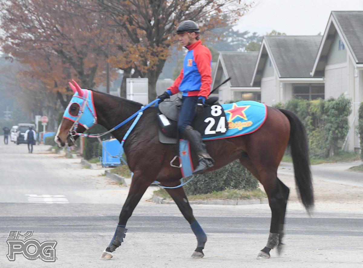 ビッグウェーブの馬体写真
