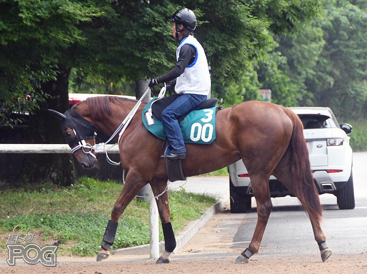 アオラニの馬体写真