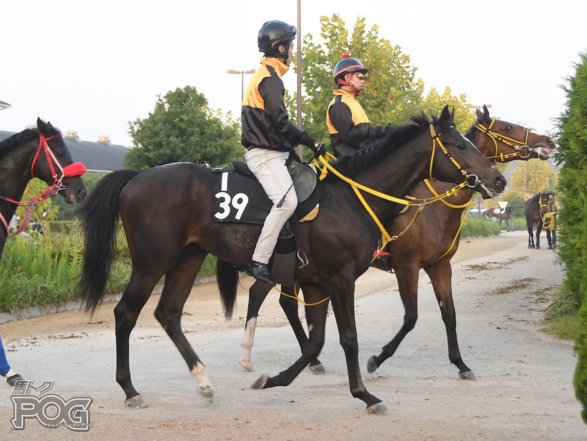 ウォーターエルピスの馬体写真
