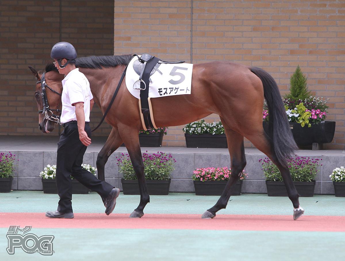 モスアゲートの馬体写真
