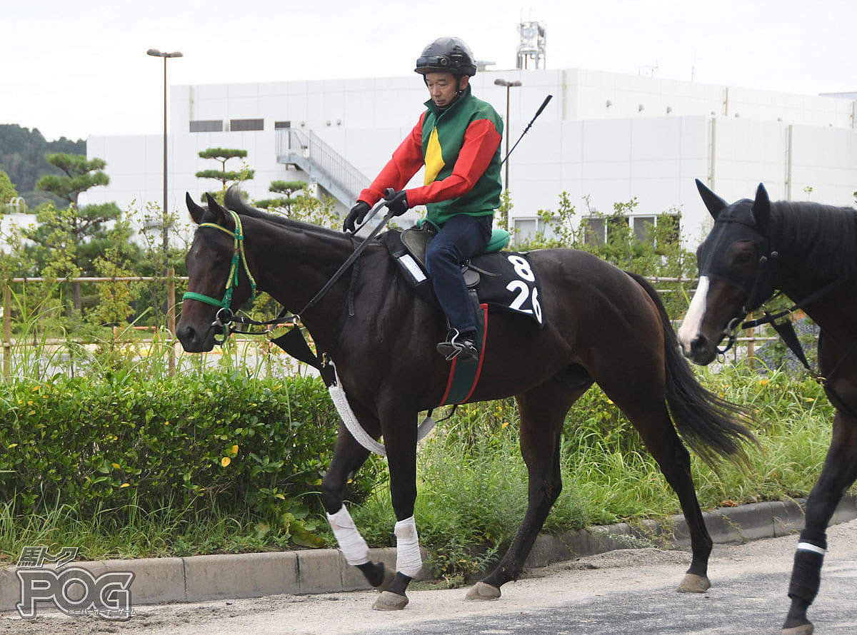 ビッグボスの馬体写真