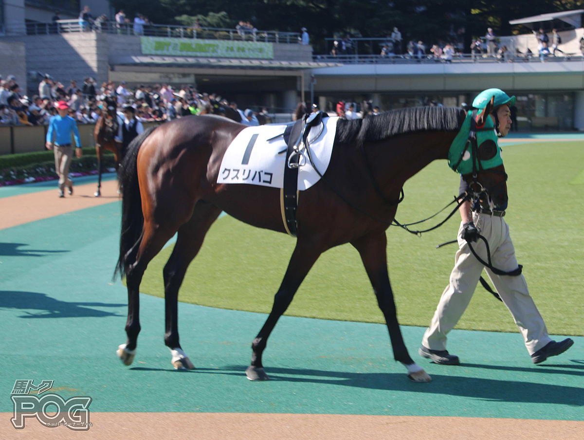 クスリバコの馬体写真