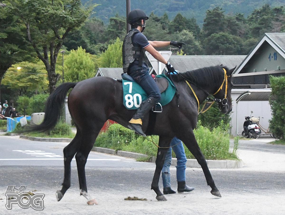 アスターシャンティの馬体写真