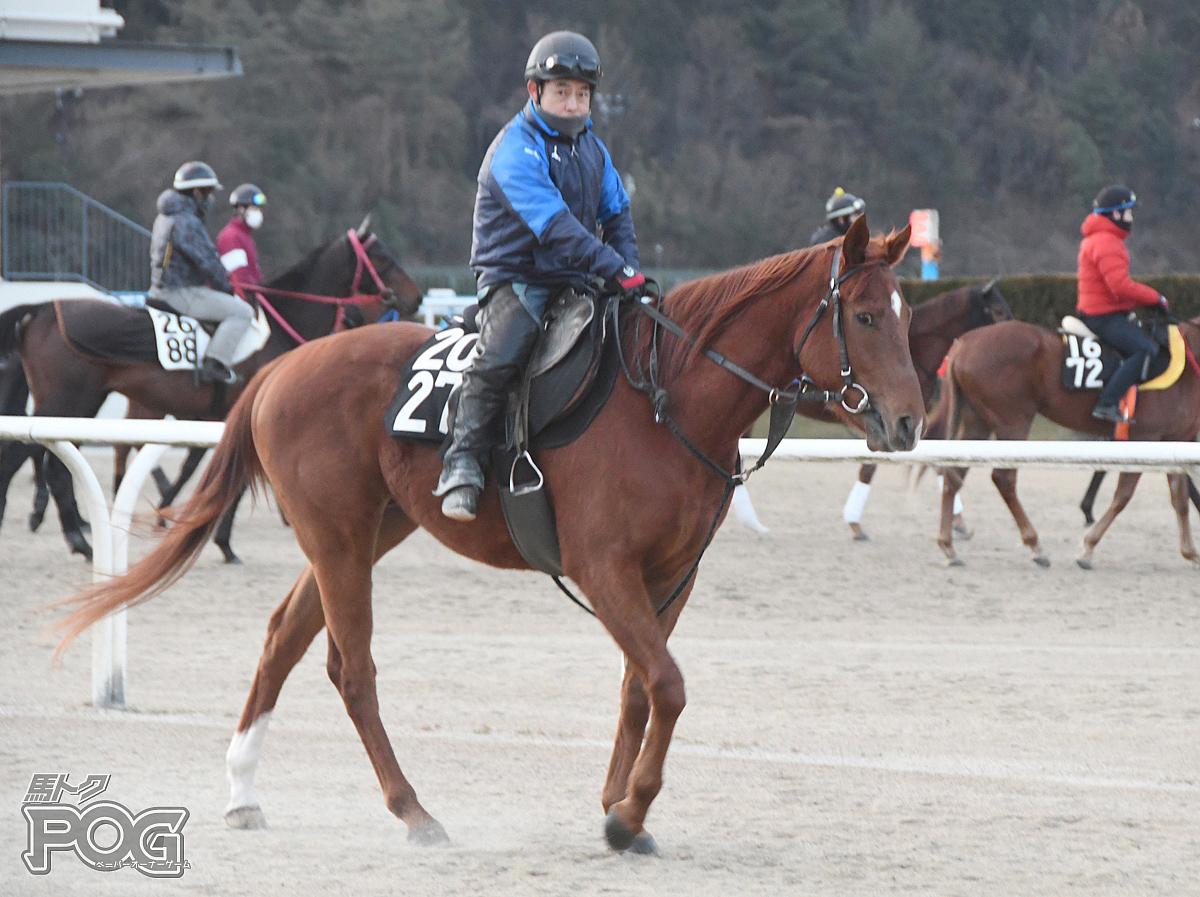 スズカフェスタの馬体写真