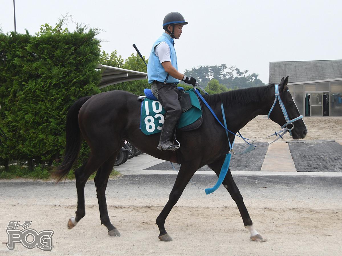 メイショウダブルの馬体写真