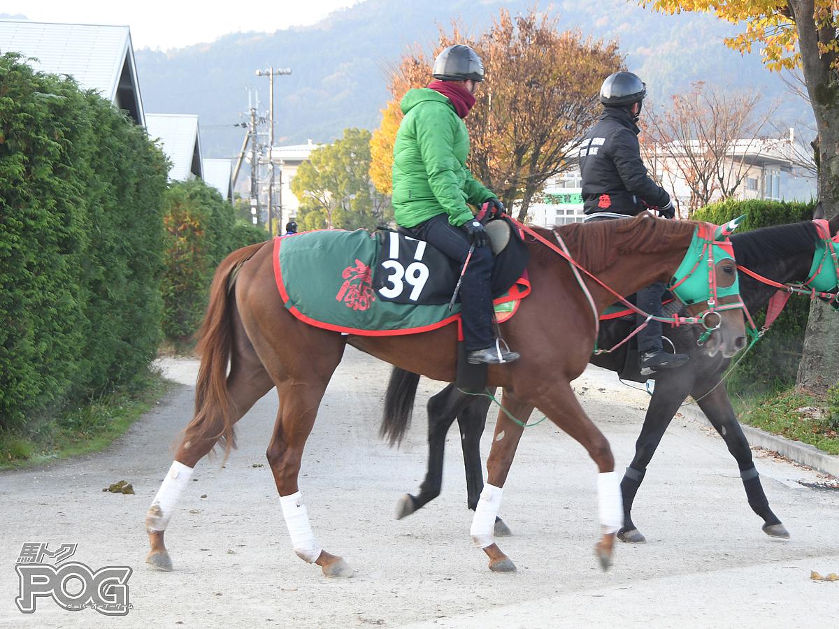 カネトシレーヌの馬体写真