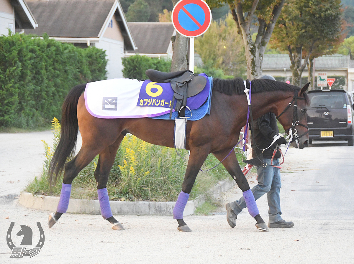 カフジバンガードの馬体写真