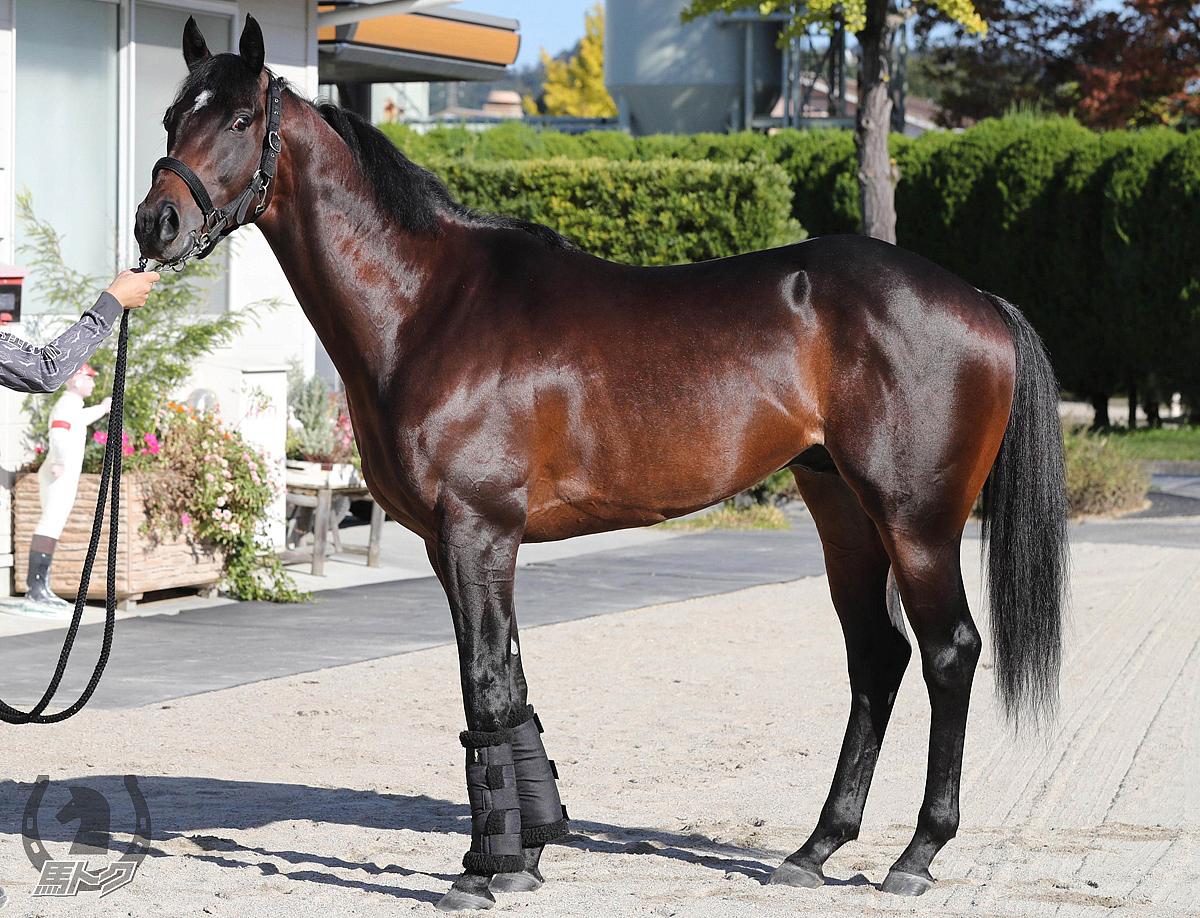 ダイアトニックの馬体写真