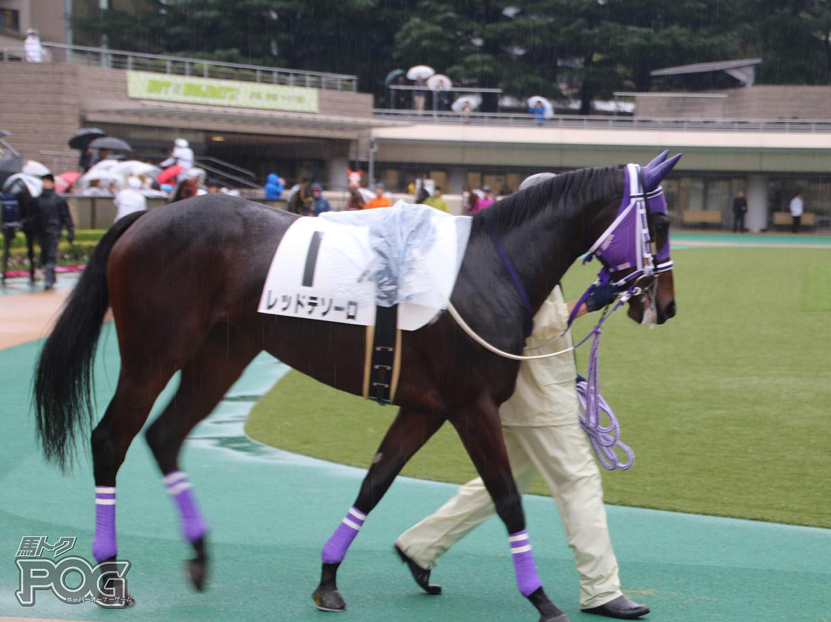 レッドテソーロの馬体写真