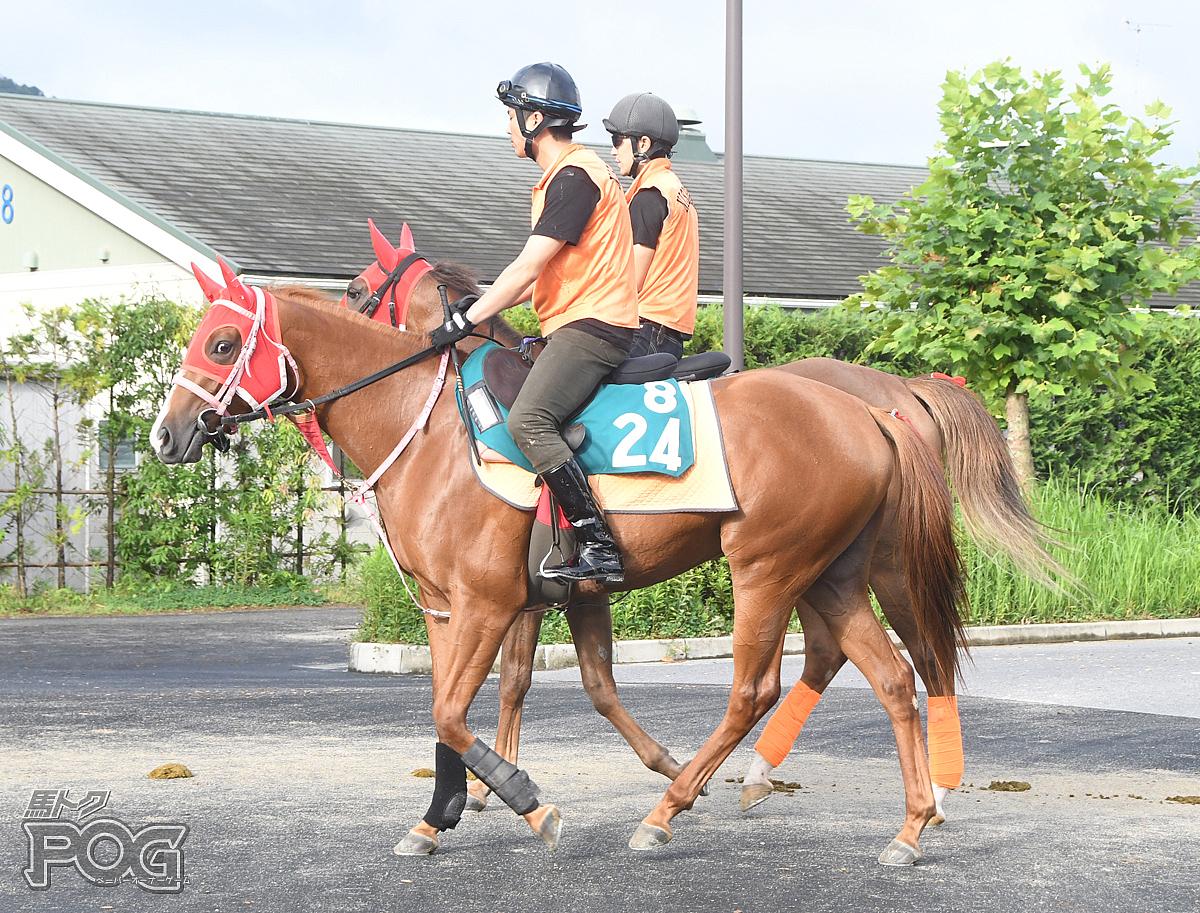 ミカの馬体写真