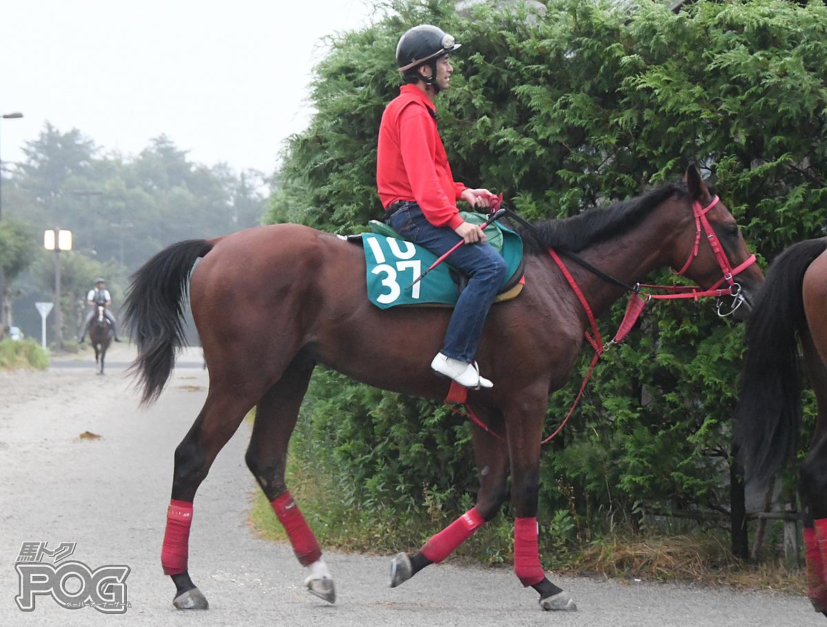 タユウグロの馬体写真