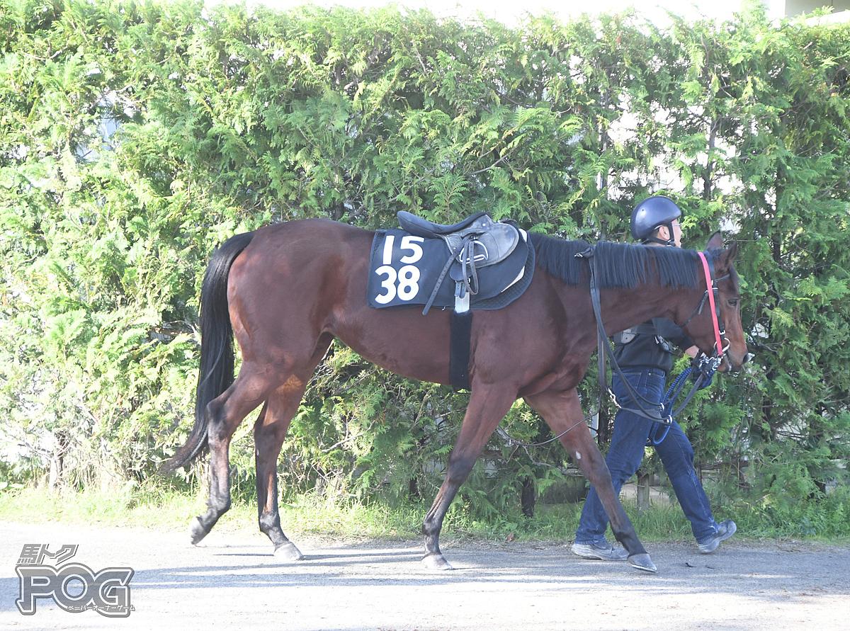 バトードラムールの馬体写真