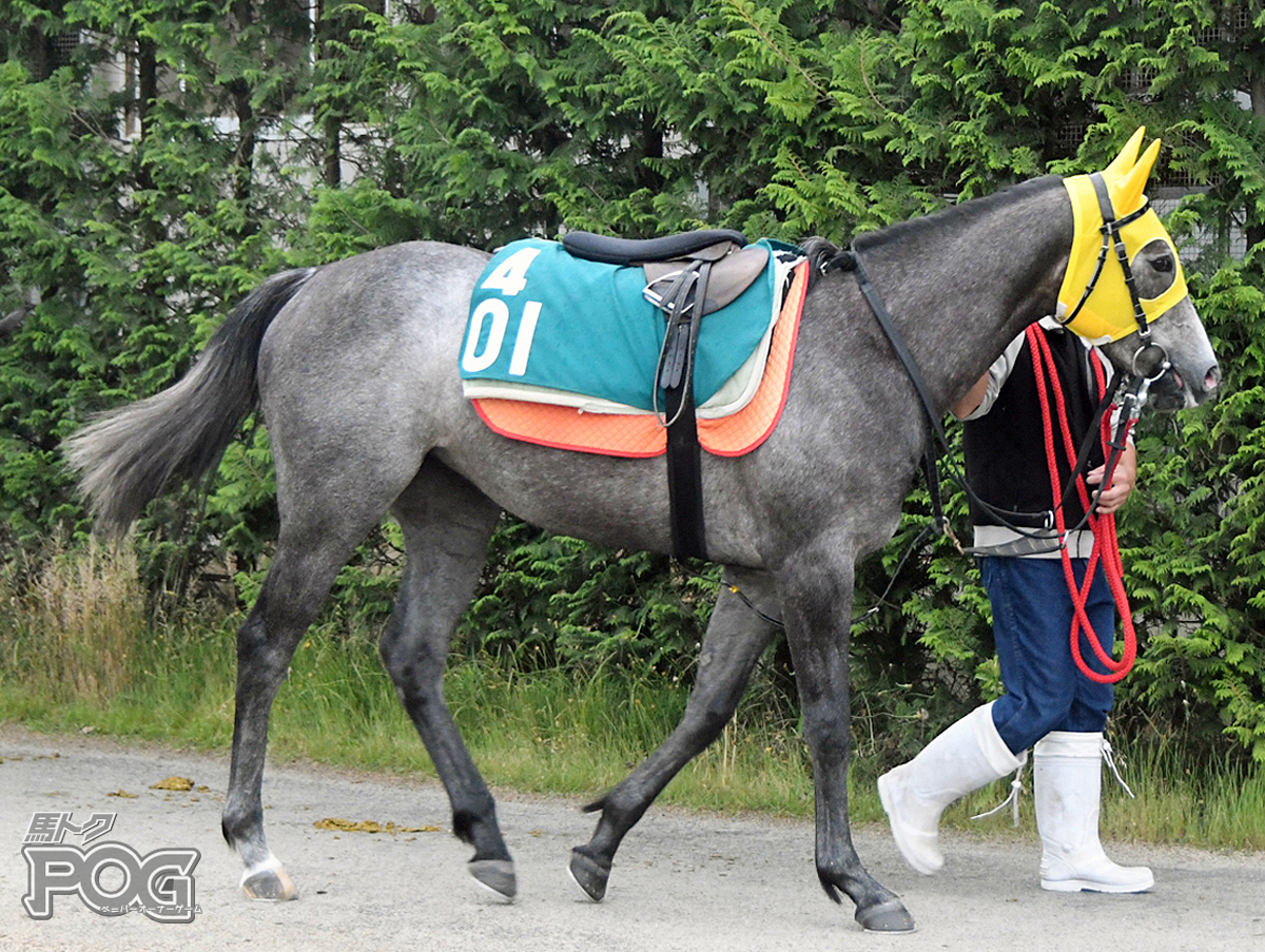 ビーチキャンドルの馬体写真