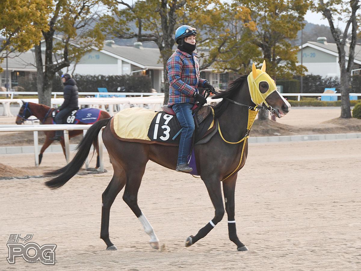 メイショウシロタエの馬体写真