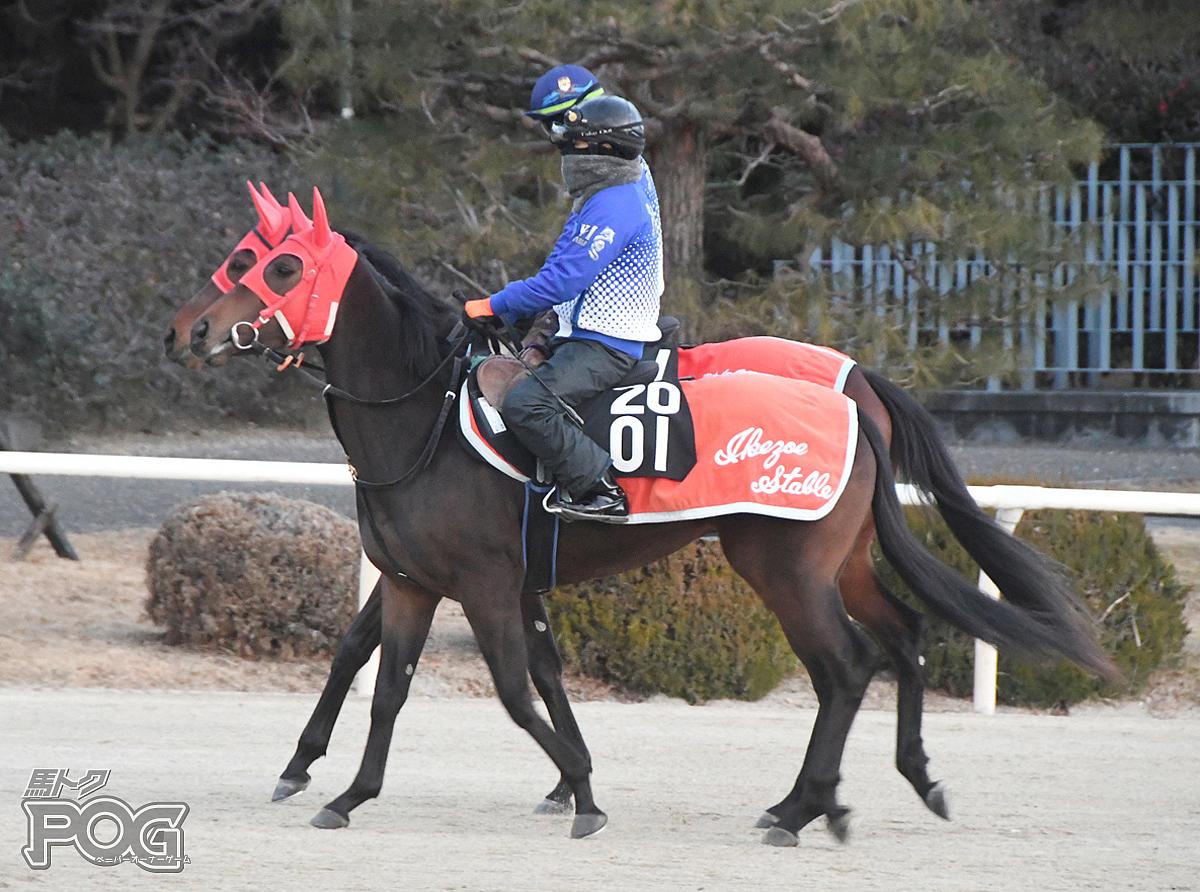 メモリーハートの馬体写真